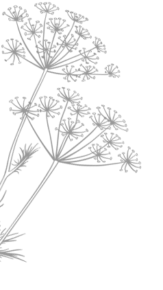 EMMA_DEAN_fennel_flowers_left.png