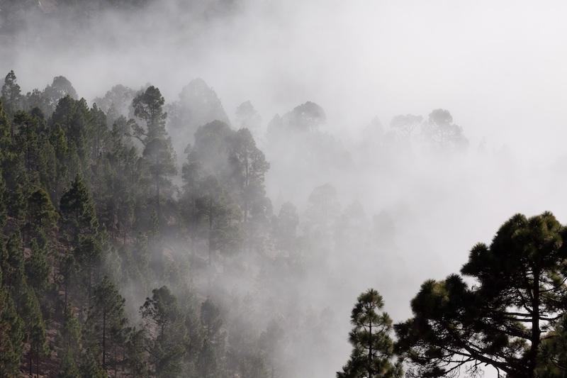 fog-571786 kopie.jpg