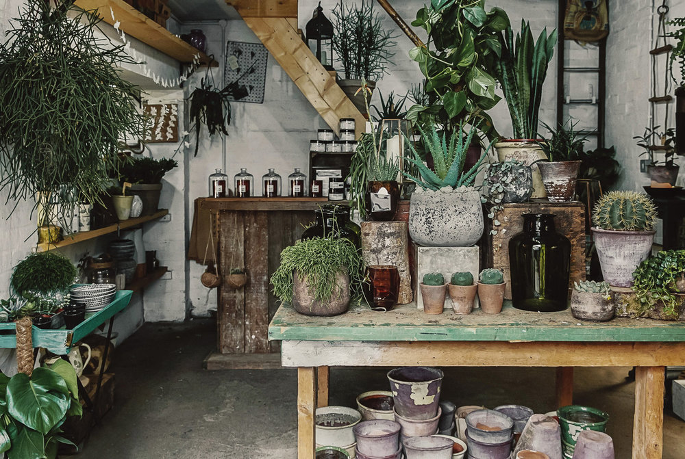 Forest shop in Deptford London
