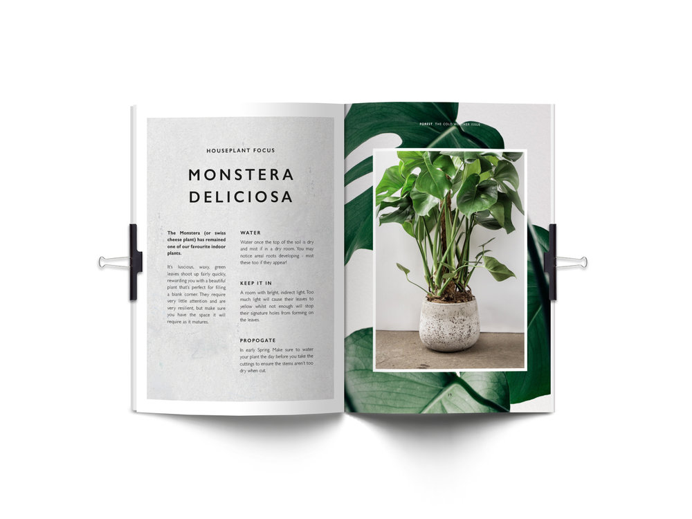 Forest Journal spread plants