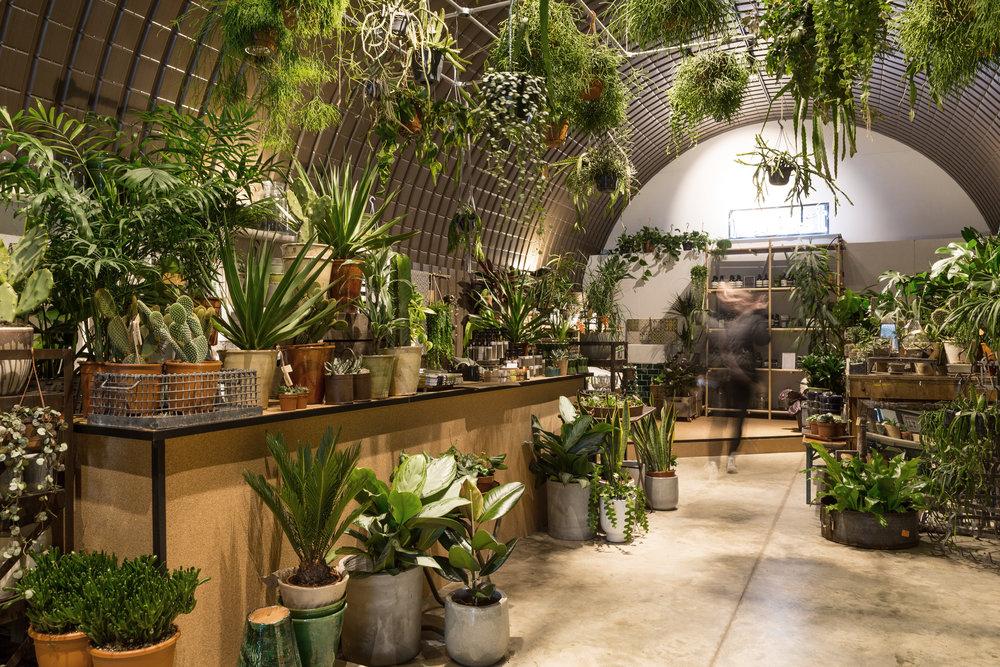 Forest plant store aesop andthen studio