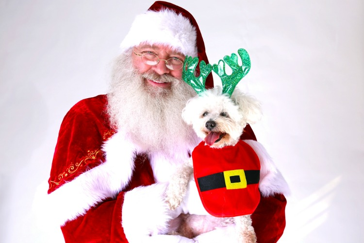 columbia-md-events-pet-photos-with-santa.jpg