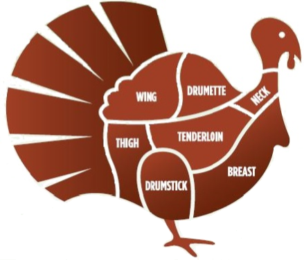 parts of a turkey drawing.jpg