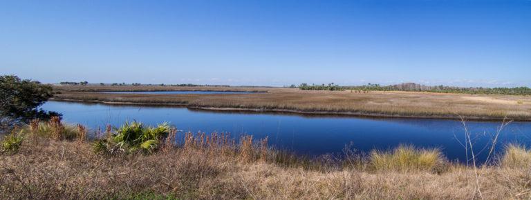 Salt marsh habitat of the black rail in Florida