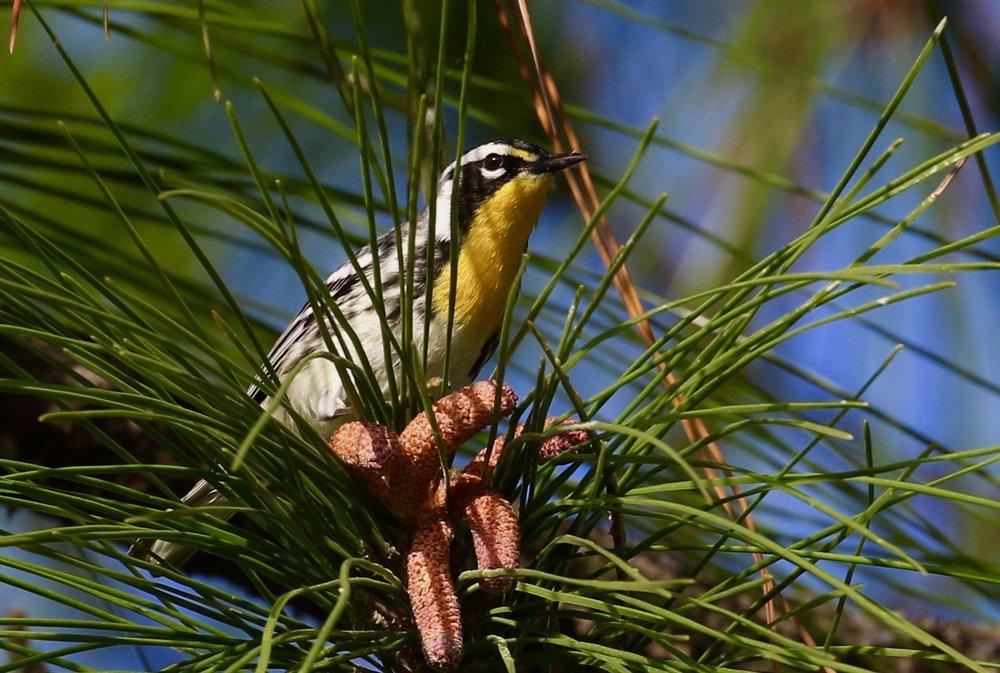 Birding Field Trips