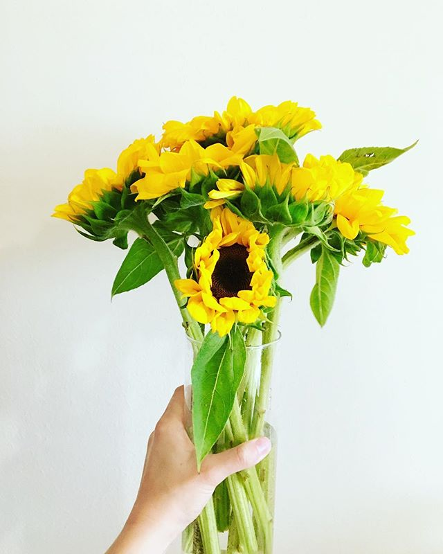 hi weekend. 🌻🌻🌻 courtesy of @wholefoodsdc // #flowerfriday  #flowersofinstagram #sunflower #summerlove #flowerlovers #bloom #weekend #flowerstagram