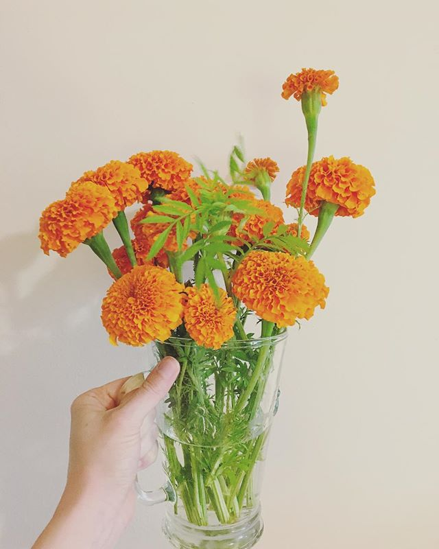 is this becoming a flowers i found @wholefoodsdc account? because i'm ok with that. these @wollamgardens 🍊blooms were too good not to share! // #blooms #flowersofinstagram #flowerfriday #nature #flowerlovers #local #flowerstagram