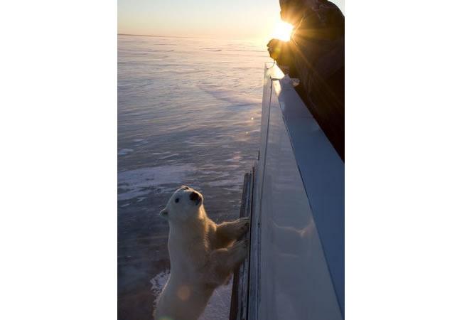 polar bear 2.jpg