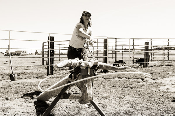 Western woman shows perfect form roping a dummy steer.