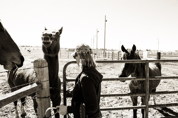 Woman at a gate with a couple horses wanting her attention.