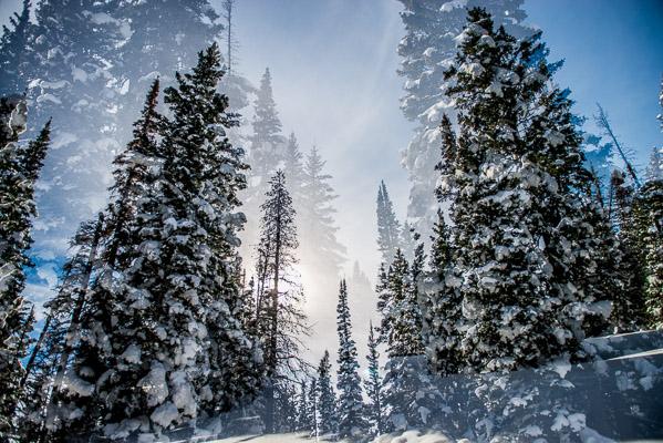 Snowy pine trees on Rabbit Ears double exposure