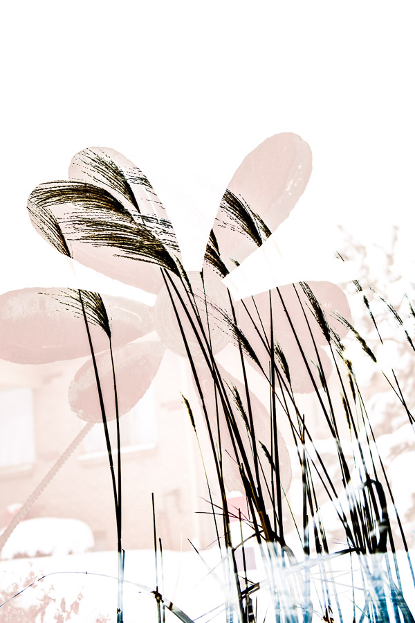 flower sculpture with grass double exposure