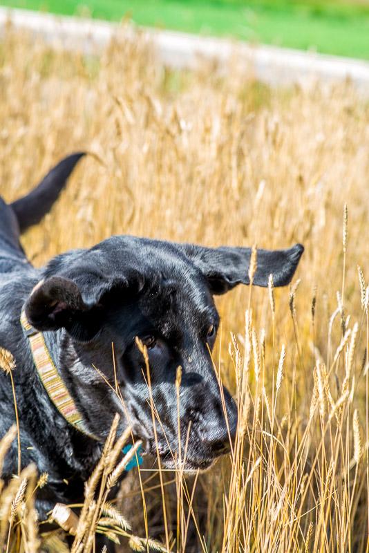 family dog runs!
