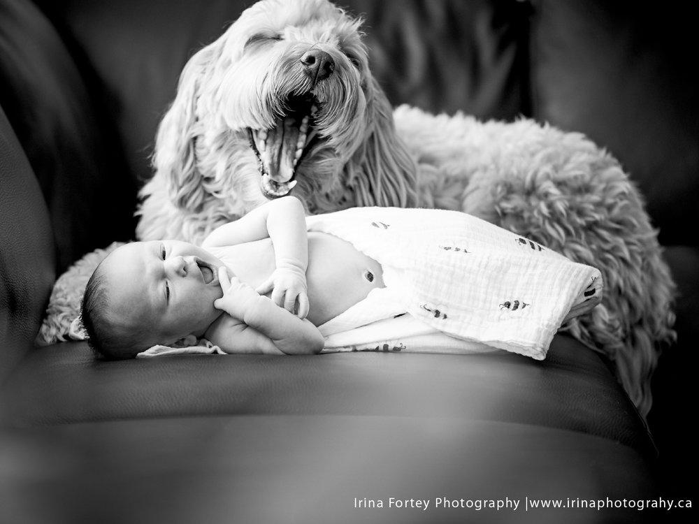 Quinn_newbornportraits.jpg