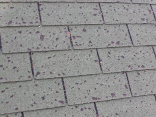 roof-hail-damage-2.JPG
