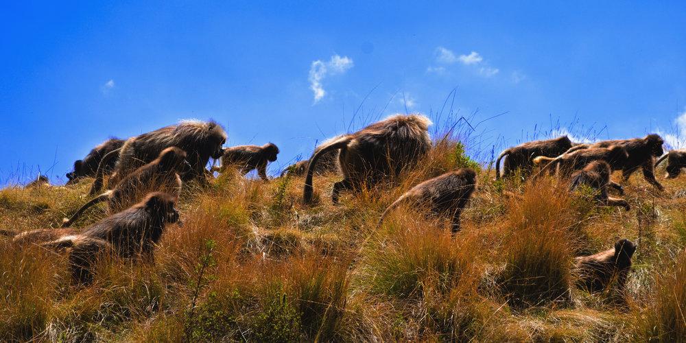 Gorgeous Ethiopia-12.jpg
