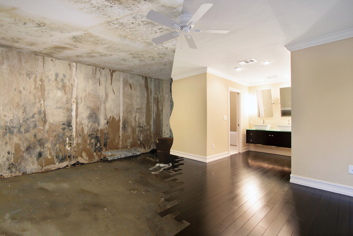 Mold Remediation 01a.jpg