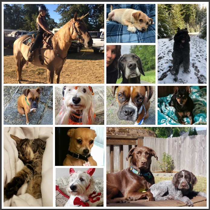 Pet Collage.jpg