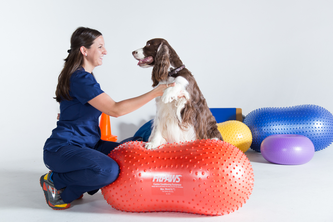Canine physical therapy - Dog Physical Therapy Jpg