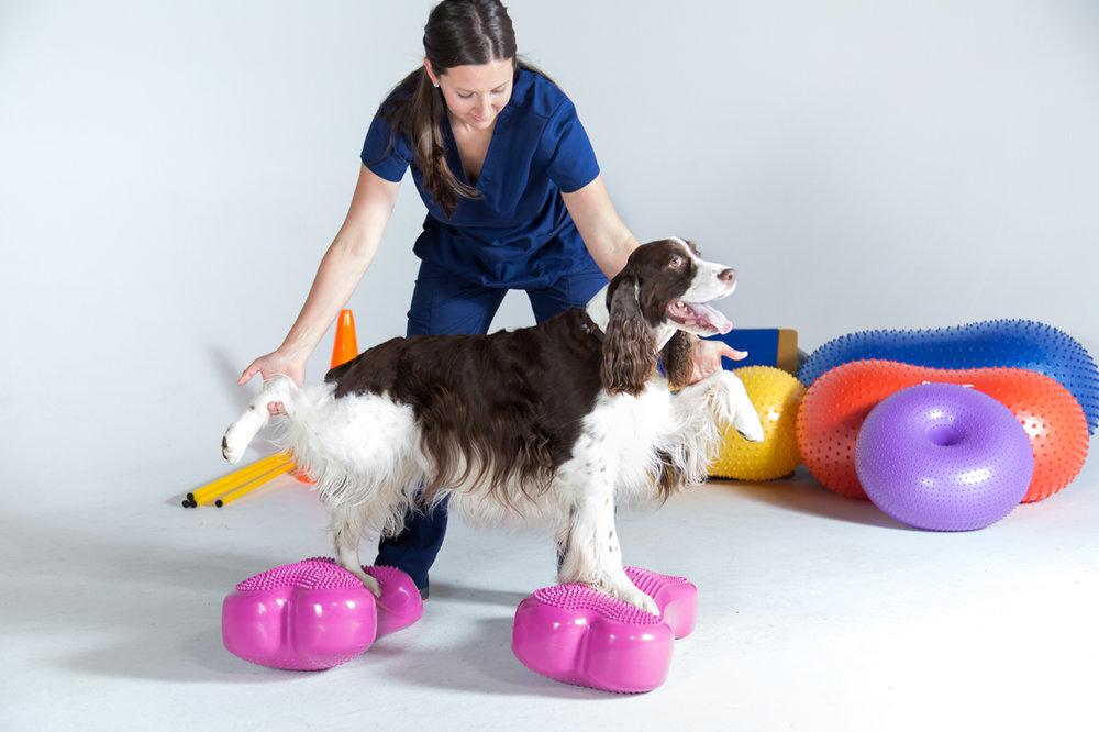 Dog injury.jpg