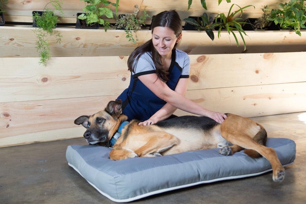 Dog massage.jpg