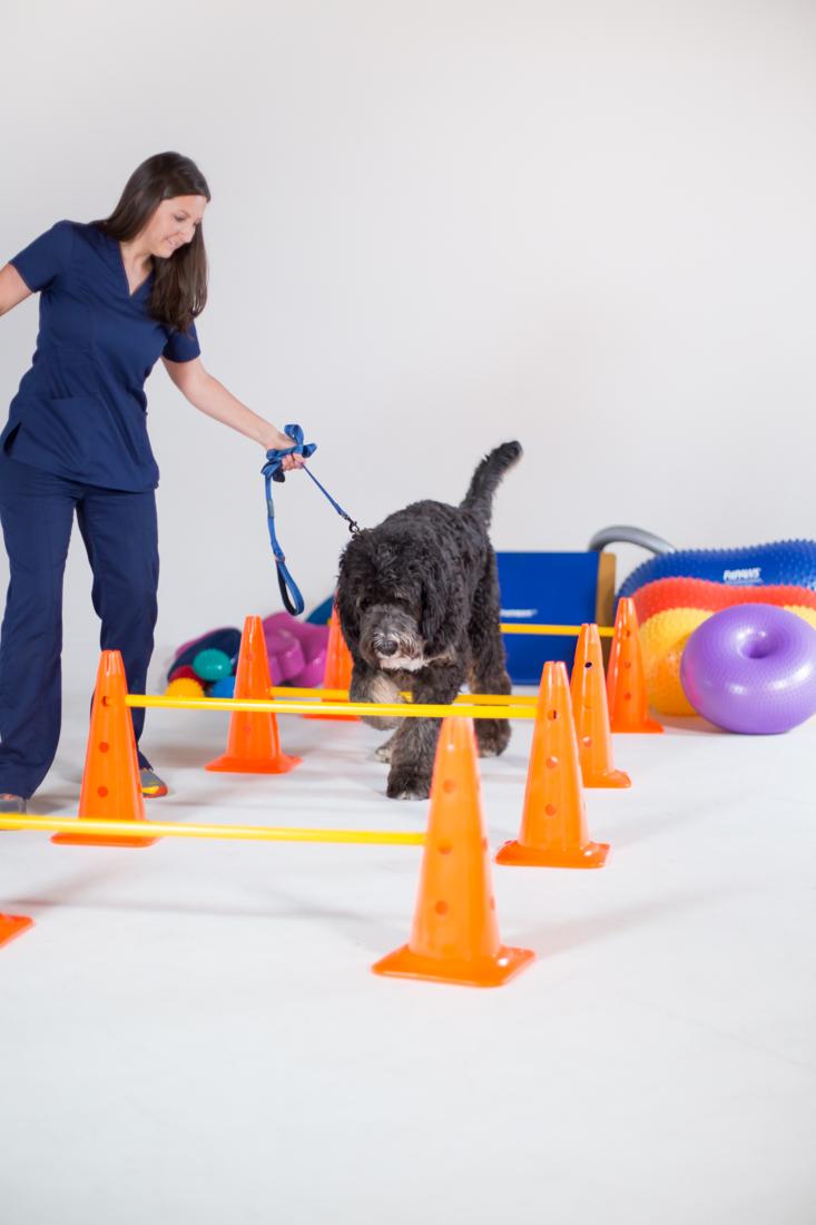 canine rehab.jpg