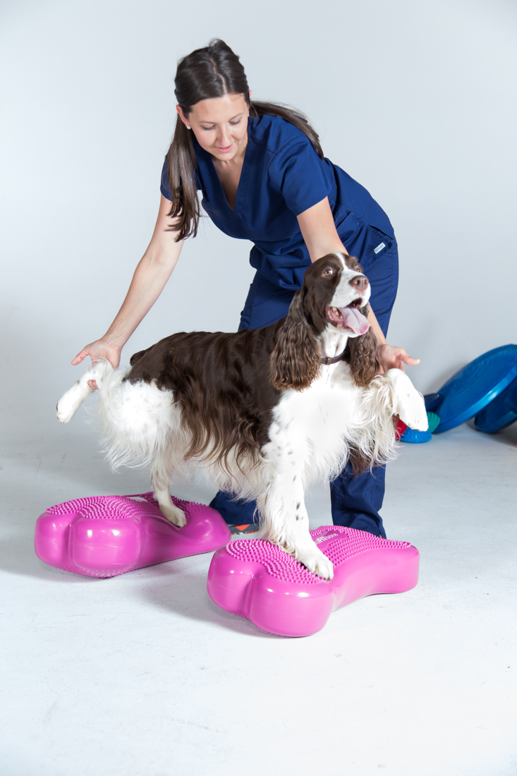 canine rehabilitation.jpg