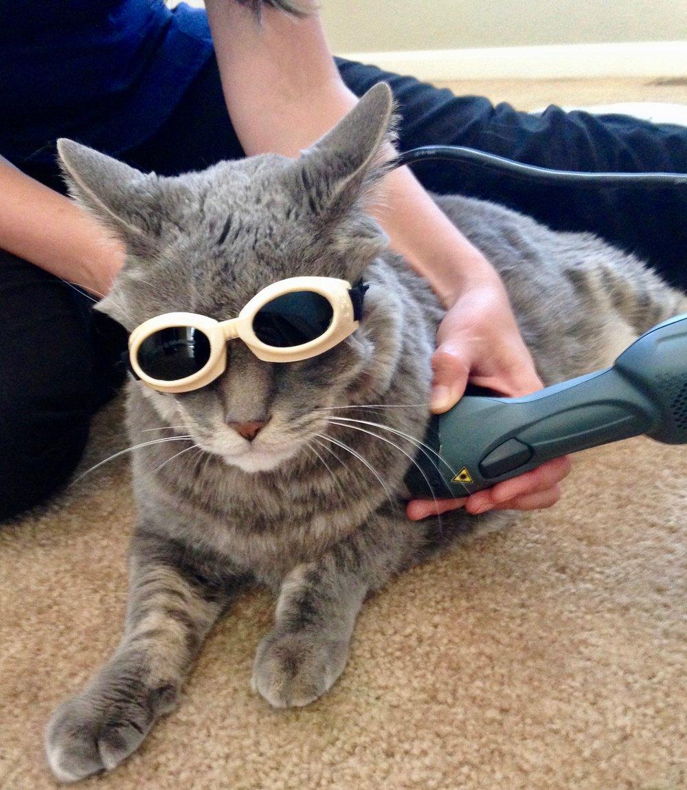 cat-injury.jpg