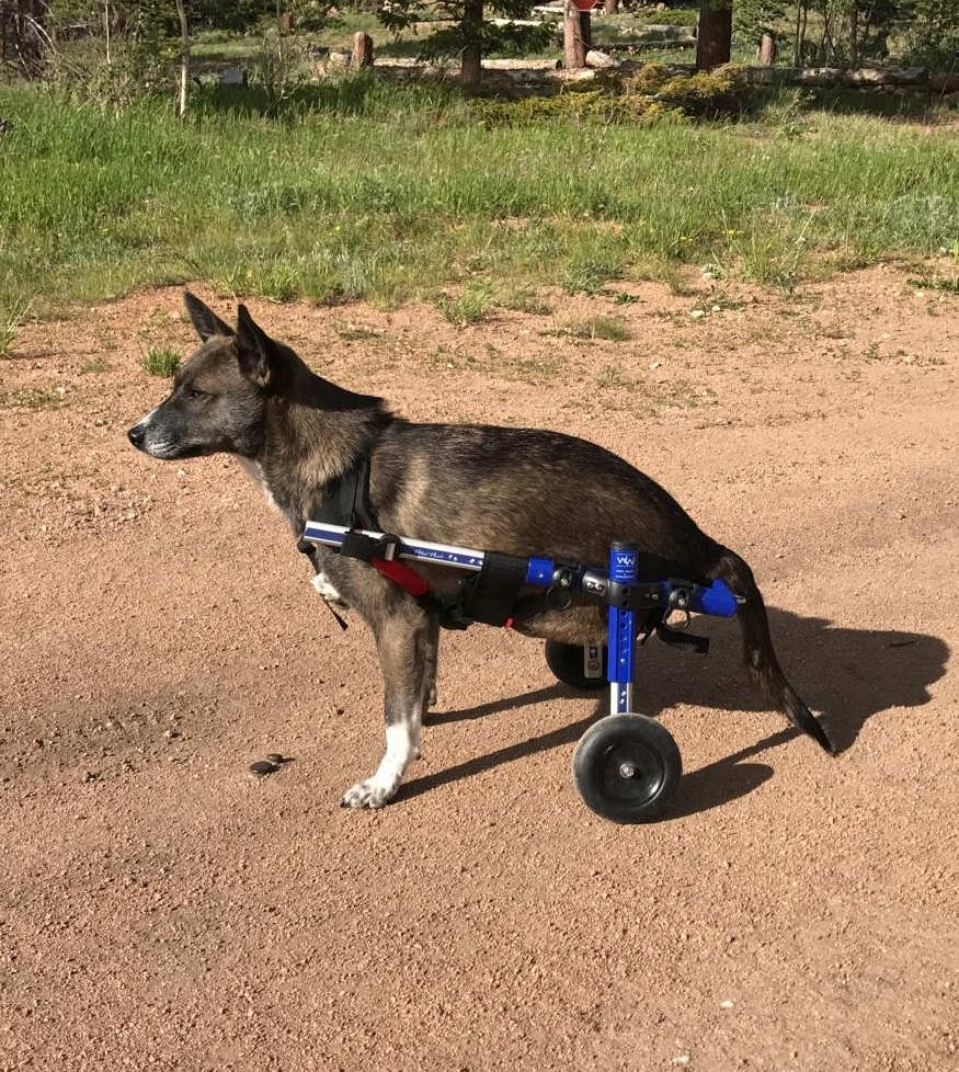 dog wheelchair.jpg