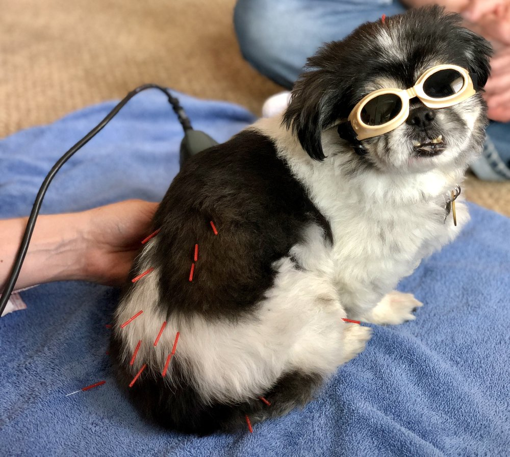 laser therapy for dog.jpeg