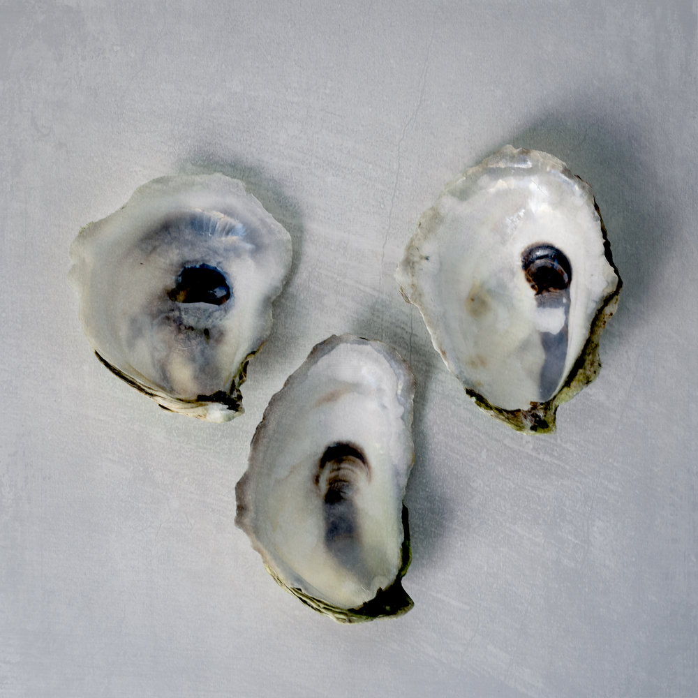 still-life-of-oyster-shells-on-white-background