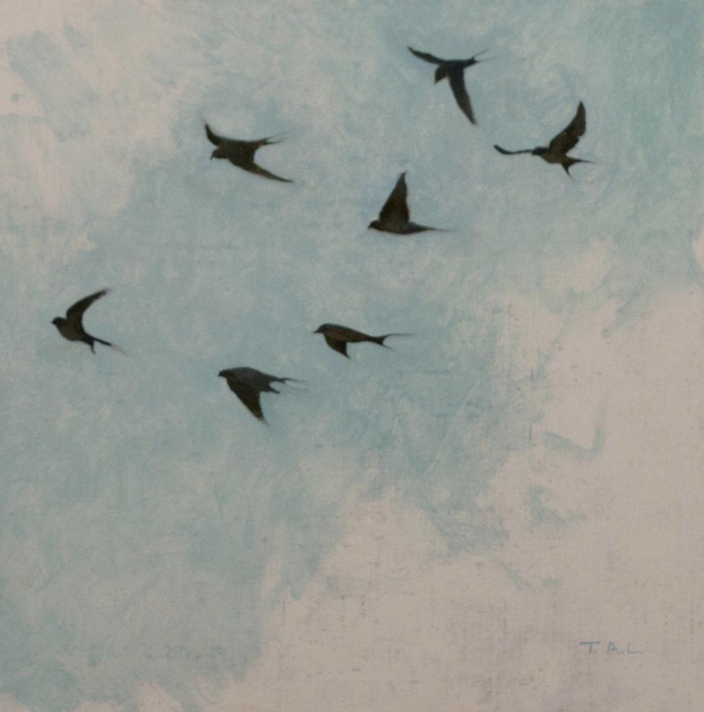 Swallow Studies, oil on linen, 12 x 12 in.