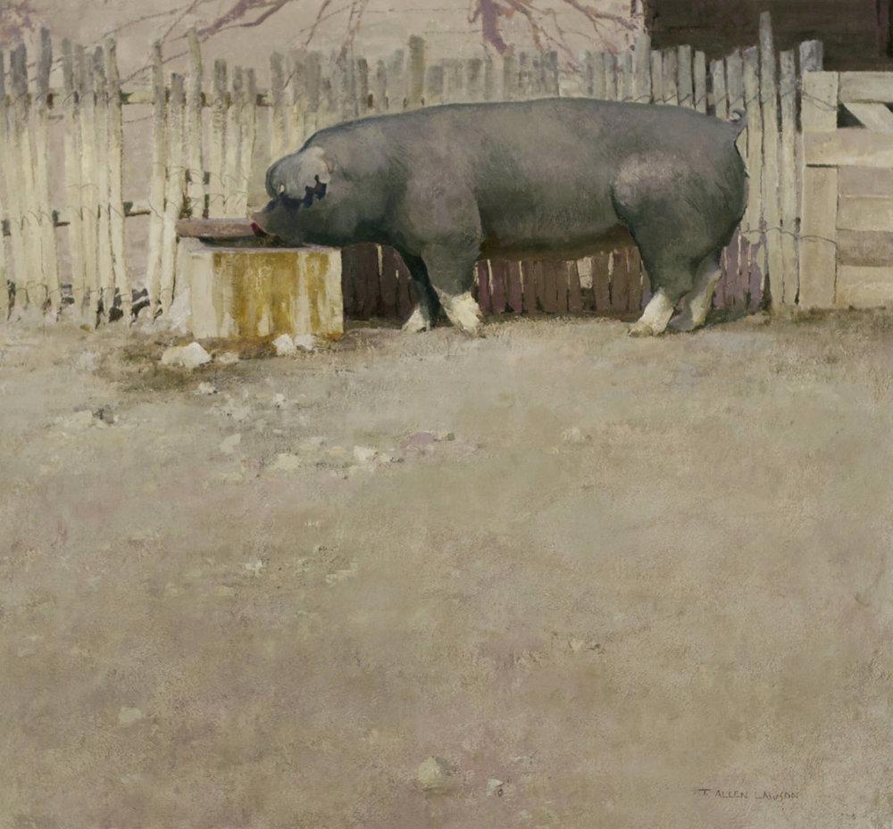 Pig, oil on linen, 26 x 28 in.