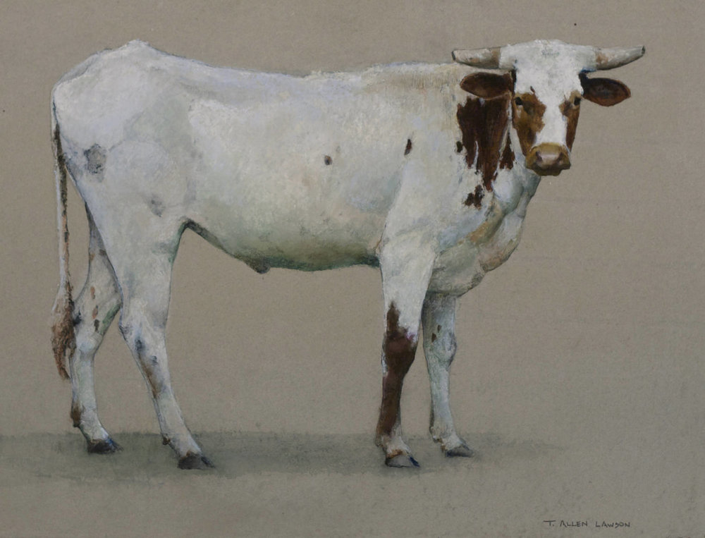 Jim's Steer, colored wax, watercolor & graphite on Twinrocker handmade paper, 13.75 x 18 in.