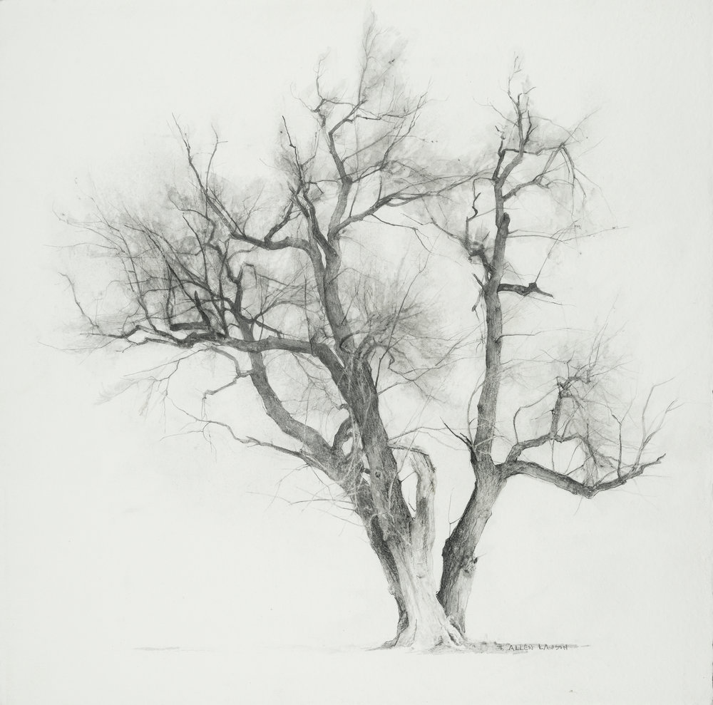 Study - Evening Tree, graphite on handmade paper, 20 x 20in.
