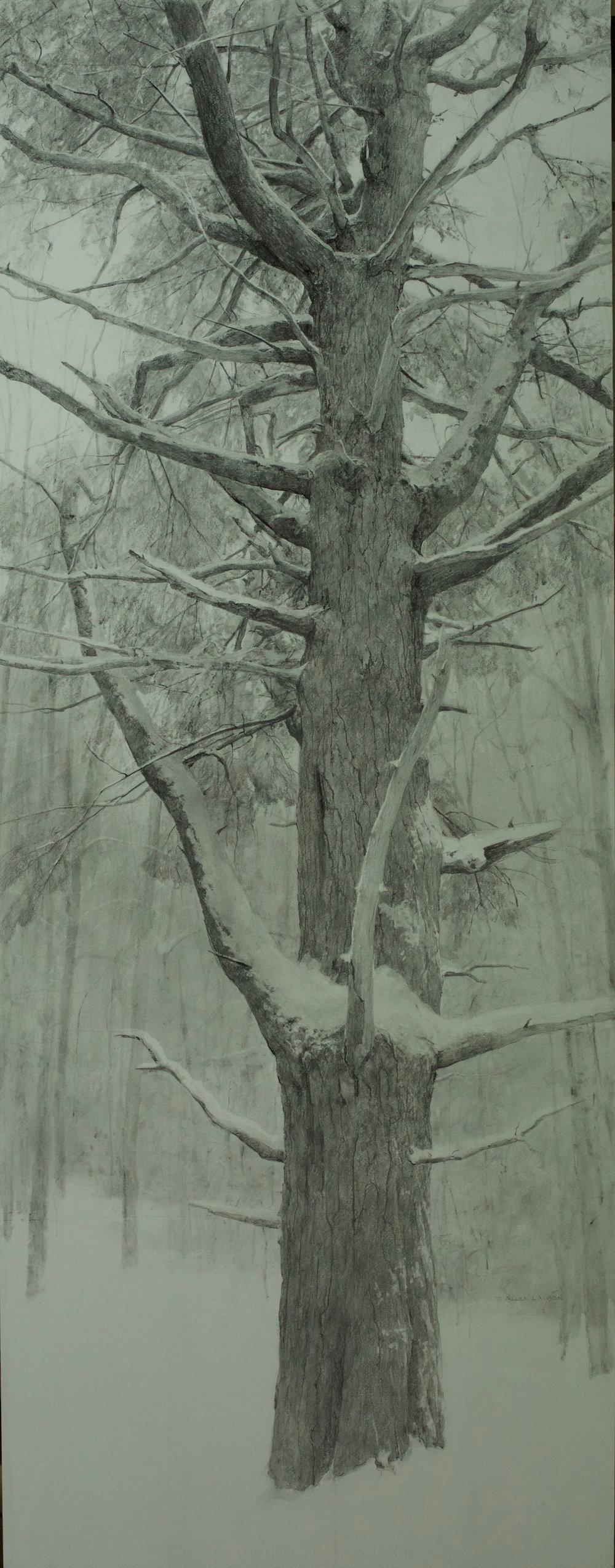 Interior Pine, graphite on paper, 54 x 21in.