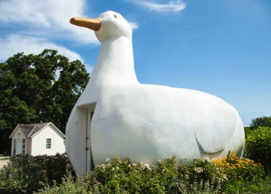 Big Duck, Flanders, NY This giant duck was once home to a shop that sold ducks and eggs. It's now a tourist center. Fun fact: Billy Joel and Christie Brinkley once lived there while Brinkley was recording a welcome tape for visitors.  https://www.topixoffbeat.com/slideshow/19342 Stacie Hougland