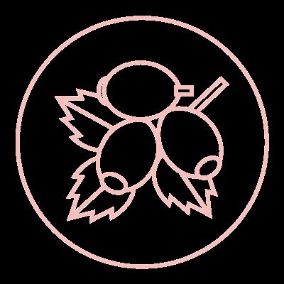 rosehip 2.jpg