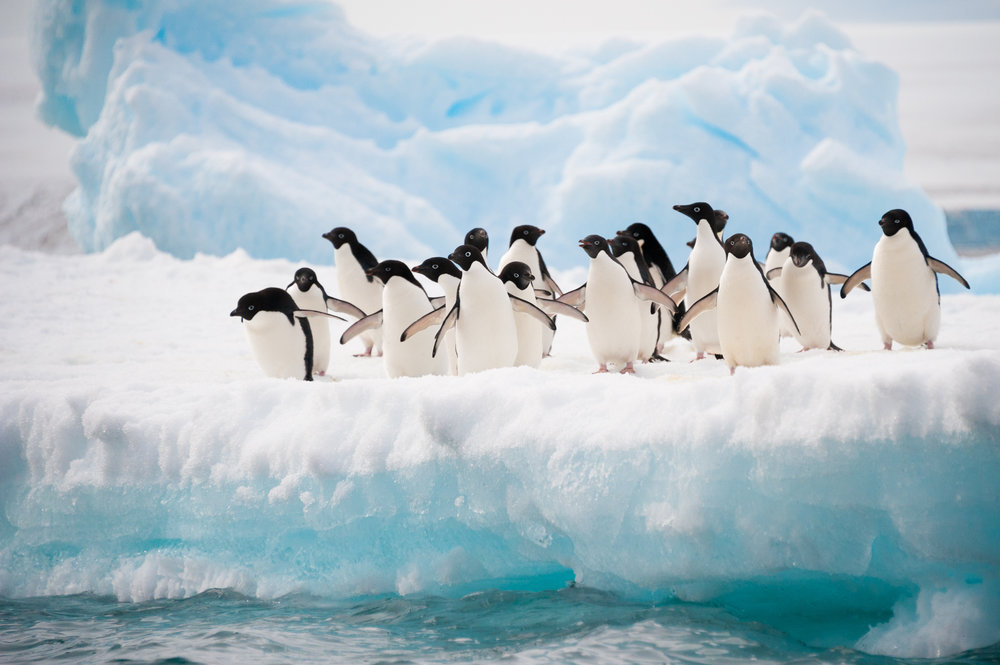 15.Brrrrr!!! Too cold for me! - Antarctica contains no countries and also no permanent residents. This may be due to the fact that Antarctica is the driest desert on Earth and also has the coldest recorded temperature of -128 degrees Fahrenheit.