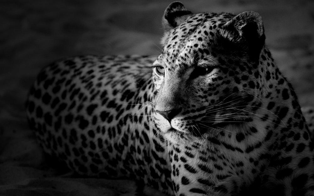 black-white-background-32.jpg