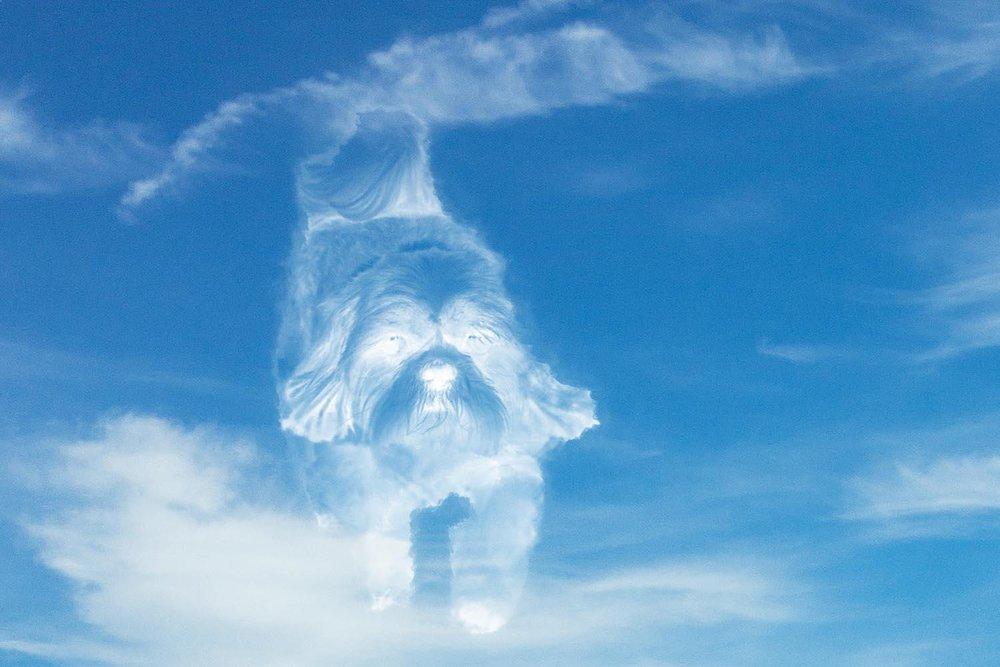 A cloud-dog runs freely through the sky