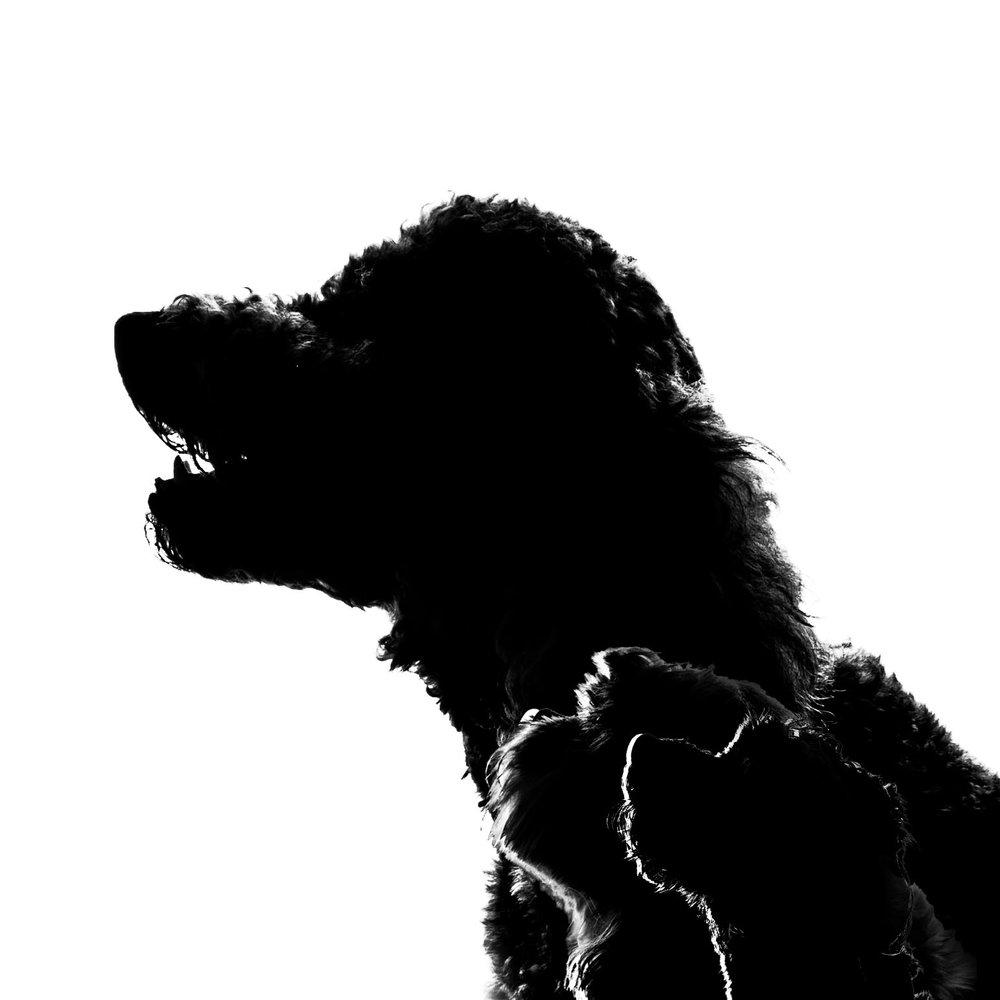 three-dog-silhouette
