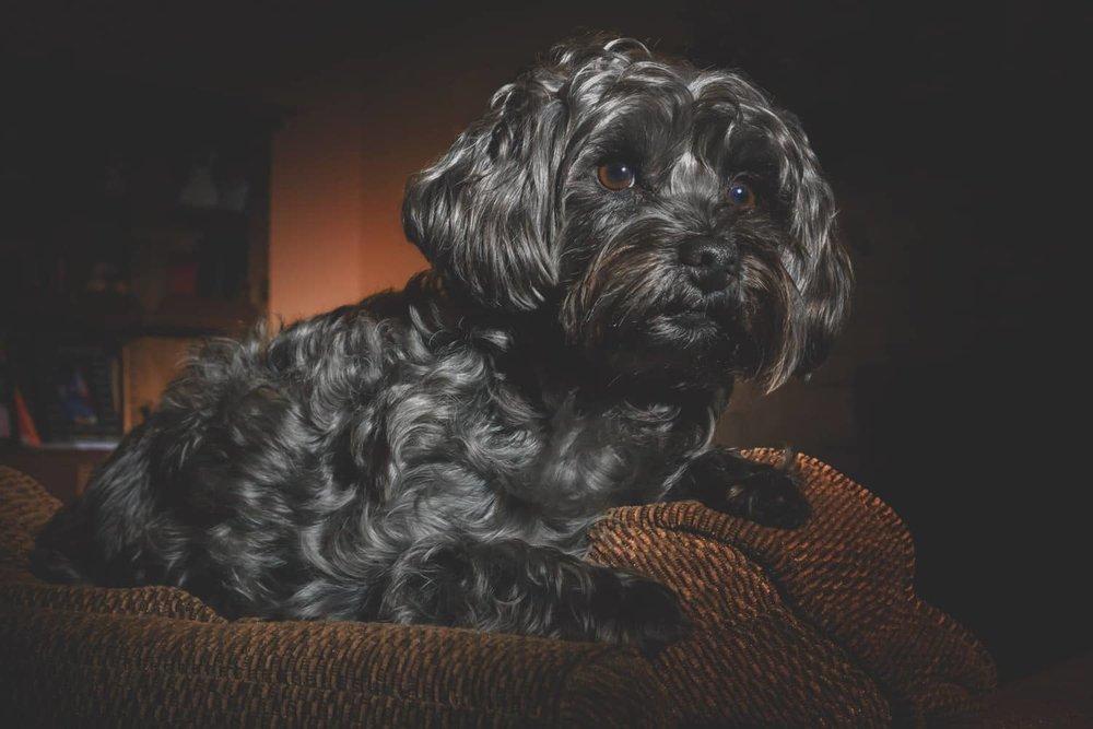 dog-photo-fill-frame