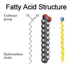 fatty+acid+structure.jpg