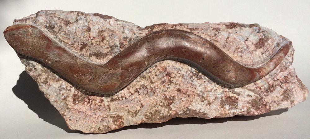 snake on a rock.jpg