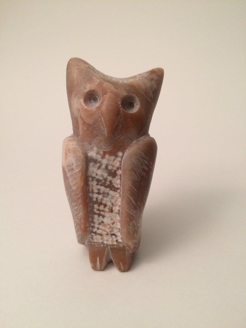 shy owl.jpg