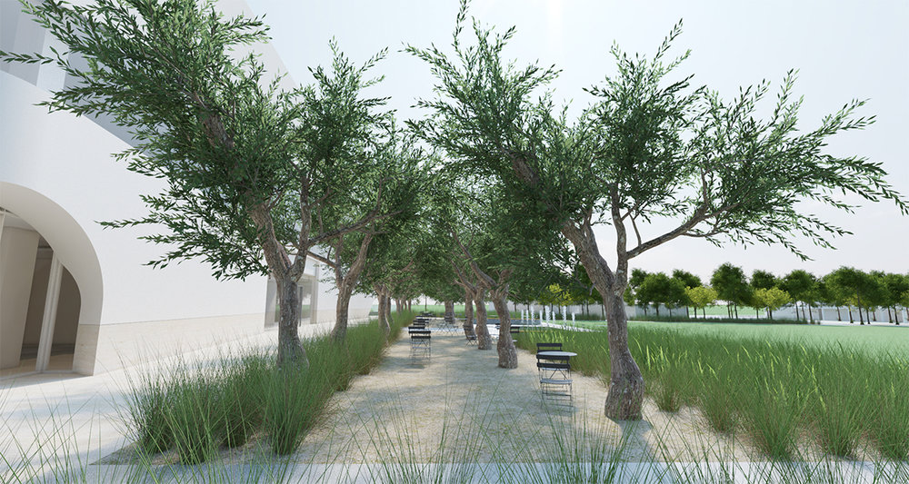 The olive grove on the north side of the library provides transition from the large expanse of green grass that is the community events lawn with a glimpse of landscapes more at home in arid and subtropical southern California.