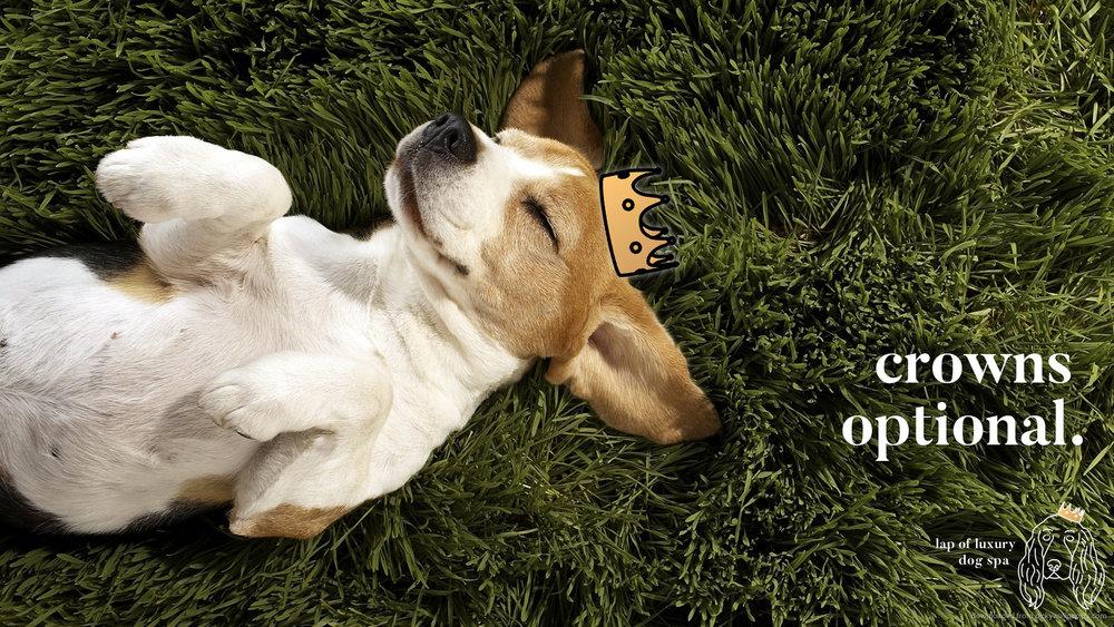 crownsop.jpg