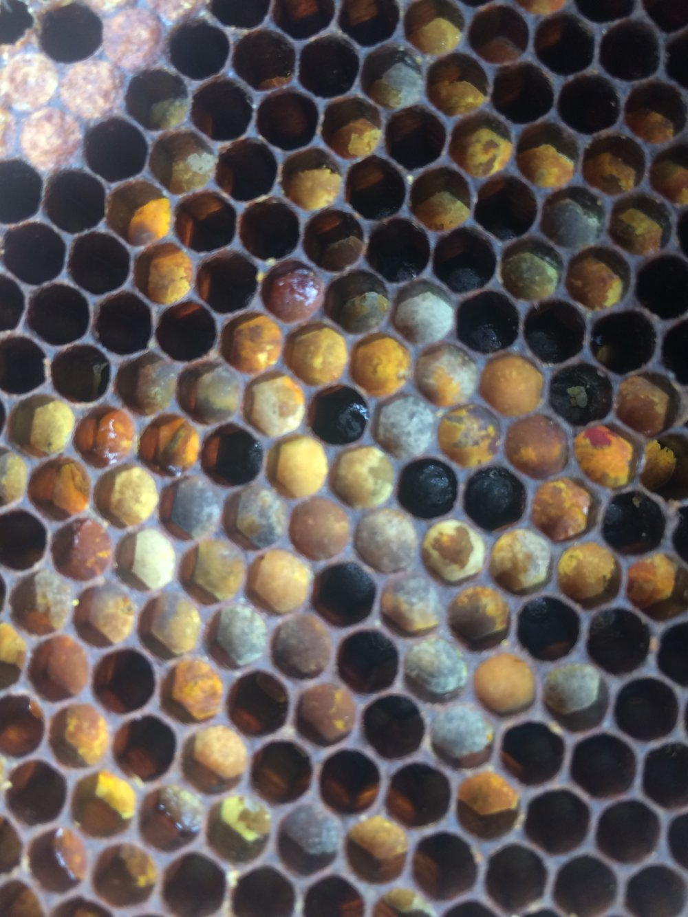 This is all POLLEN that the bees collected and stored in the hive.