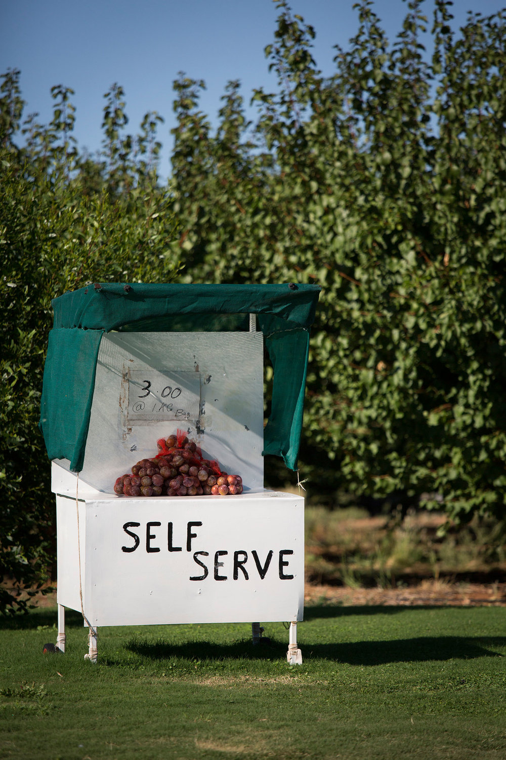 Roadside stall selling blood plums, Mildura, VIC.